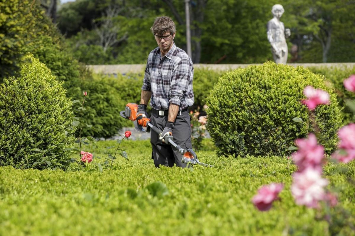 Taille ornementale des haies et arbustes 3d paysage for Servicio de jardineria df